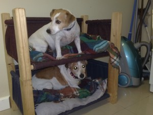 Dog double bunk